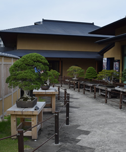 Japanese Religious Tradition and Culture: The Toro Bonsai Village