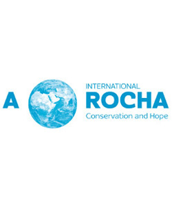 Arocha
