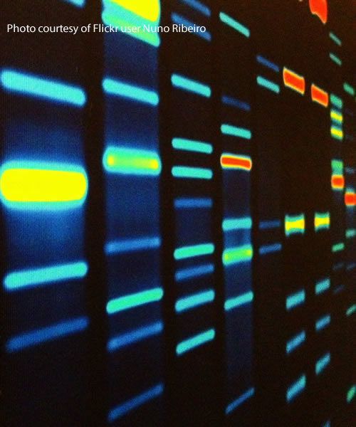 DNA portrayed in columns by Flickr user Nuno Ribeiro