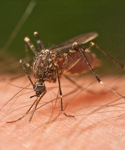 Zika and Faith-based Organizations: Realizing Health Human Rights