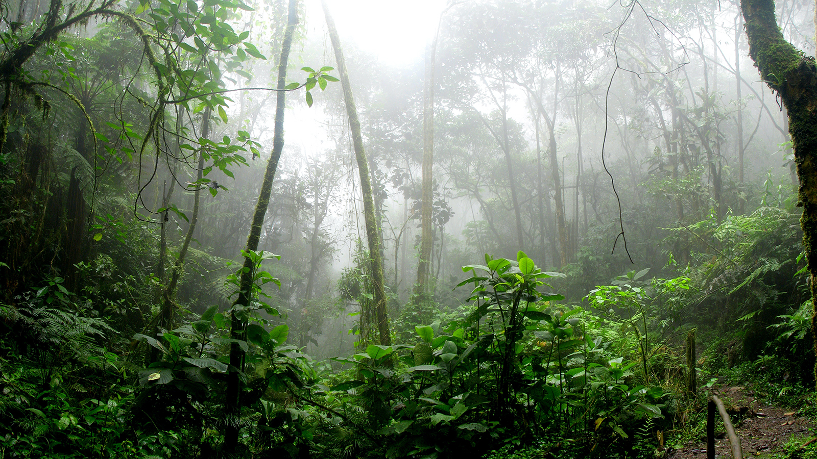 Misty Amazonian rainforest.