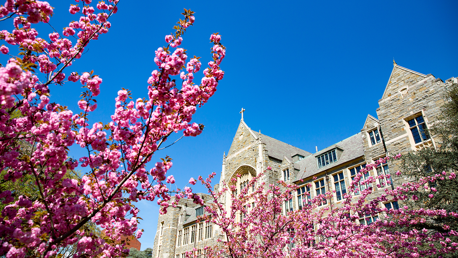 Main campus of Georgetown University during springtime.