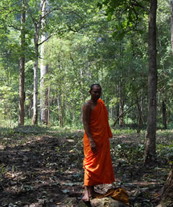 A Walk in the Woods with Venerable Bun Saluth of the Monk's Community Forest