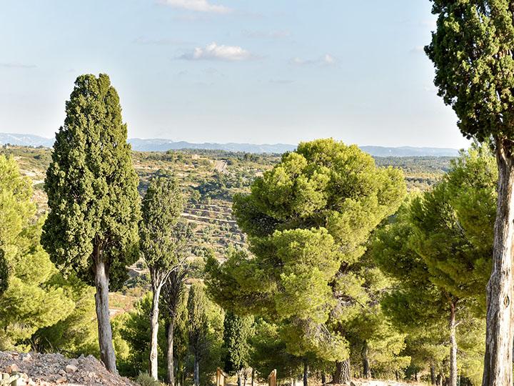 View from the Church of Santa Barbara at Valdealgorfa, Spain. Photo by Sean Rowe, 2016.