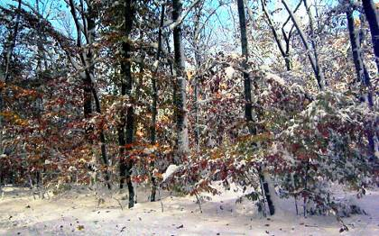 October 2011 snowstorm, Tyringham-Monterey Rd. in the Berkshires.