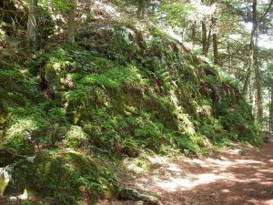 Bartholomew's Cobble, Sheffield, Massachusetts, view of a ledge with ferns; photo: wiki user Daderot.