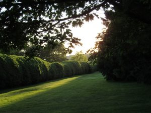 Setting sun Tanglewood, June, 2016. Photo: Dave Read, BerkshireLinks.com.