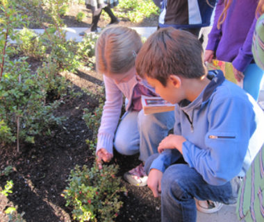 Kids inspecting plants