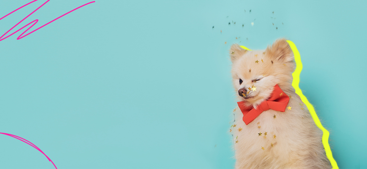 How To Throw A Gender Reveal Party For Your Pet | Betches