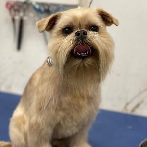 J & J Pet Grooming logo