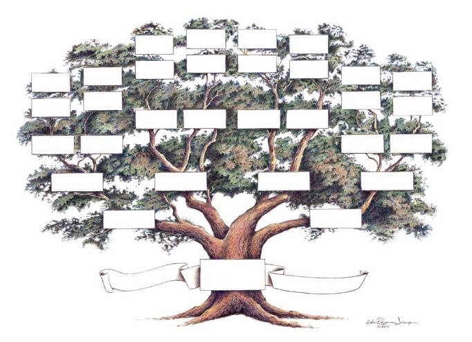 Family tree illustration by The Raymon Troup Studio