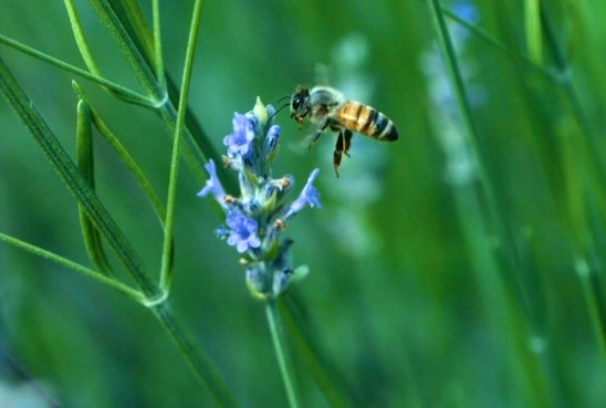 A bee in flight captured in the video by The John 10:10 Project