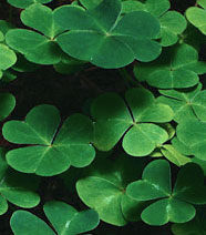 Learn about the Real Saint Patrick