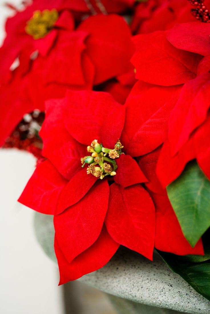 Top 10 Beautiful Flowers For The Best Christmas Spirit Big Day Quote