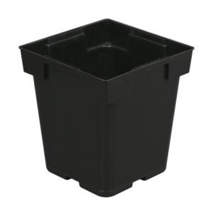 Black Square Pot (Jumbo Senior) 5 in x 5 in x 6.5 in (200/Cs)