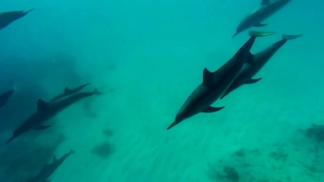 Product Dolphin Swim & Snorkel