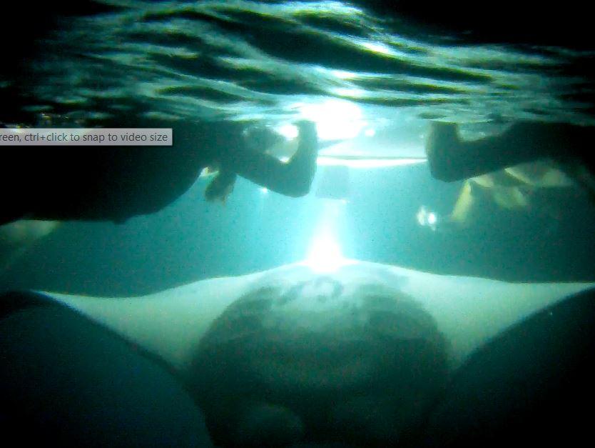Product Small Group Manta Ray Night Snorkel