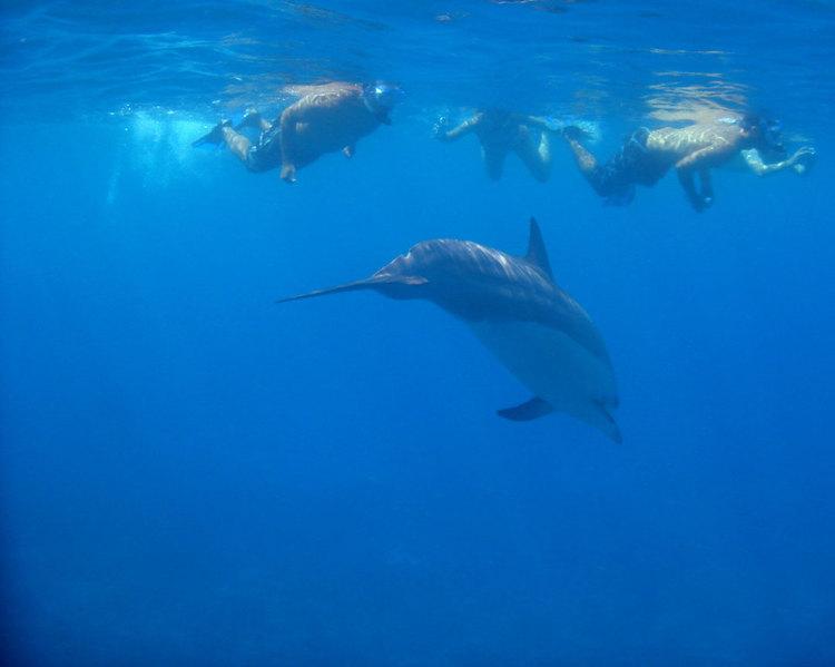 Product Private Dolphin or Manta Swim