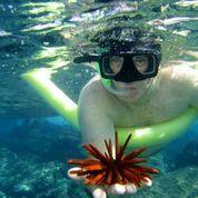 Product Waikoloa/Kohala Snorkel