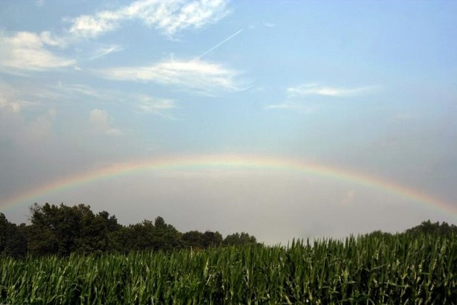 Energy_rainbow_corn