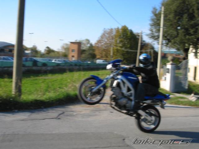2003 SUZUKI SV 650 | Picture 75895 motorcycle photo