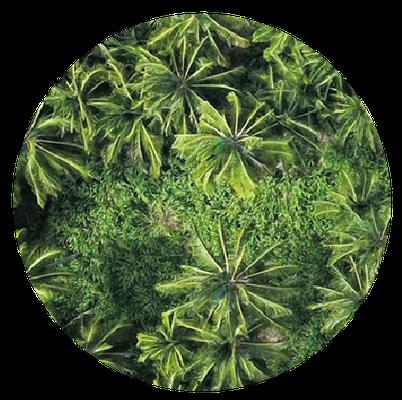 Foresta Bioclin in collaborazione con Treedom