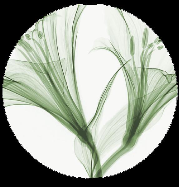 <p>Attivi di origine naturale:<br /> dalla pianta alla tua pelle.</p>