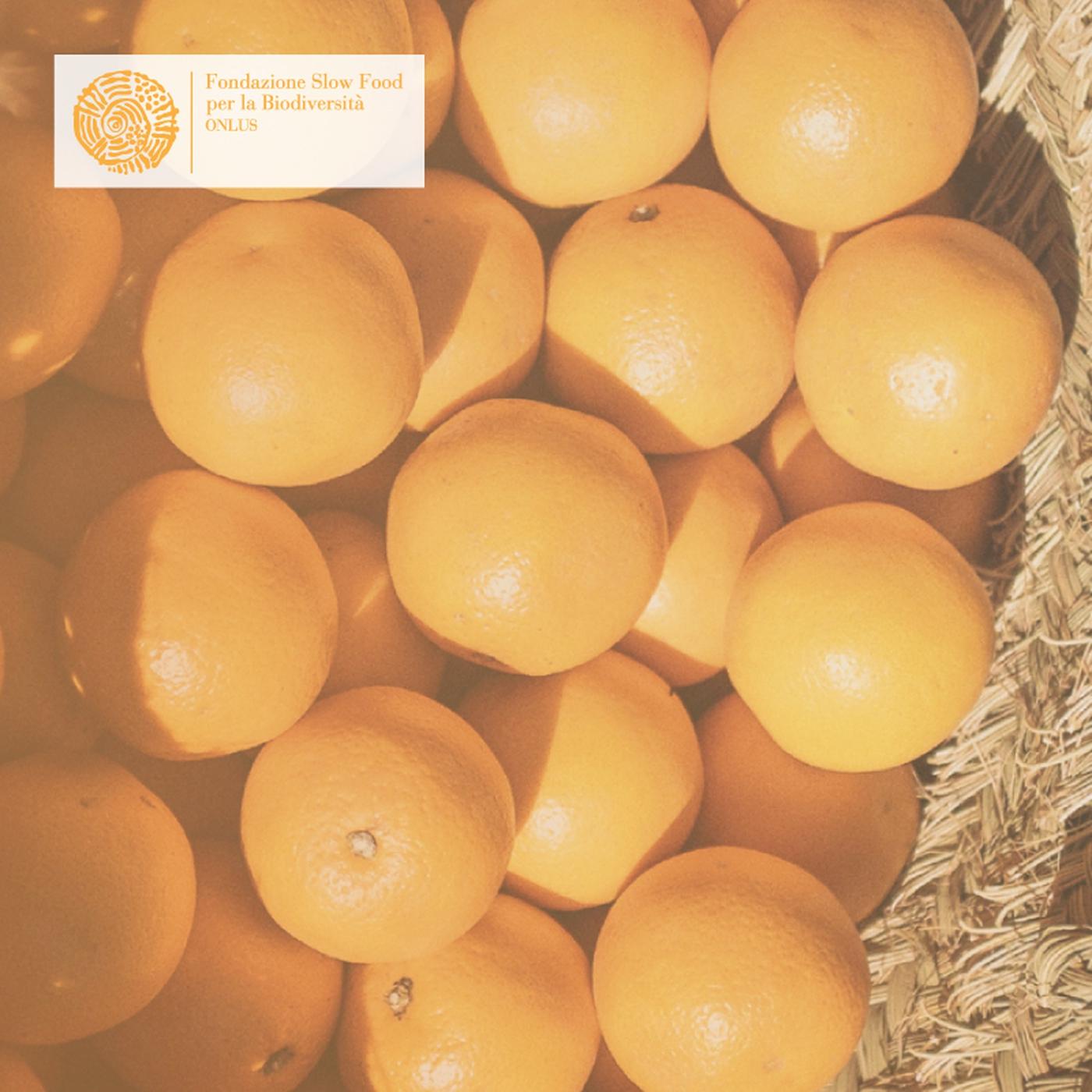 Bio-Essential Orange