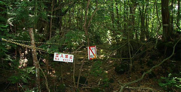 Aokigahara Japan