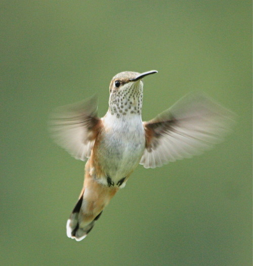 low priced 5e4fc 6ffef BirdFellow - Birding services, social networking, and habitat ...