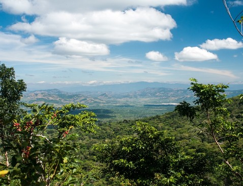 Finca las nubes honey product list bigger cropped