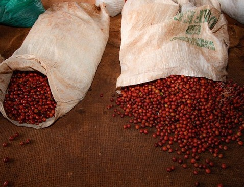 Nyeri 20aa 20bags product list bigger cropped