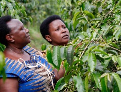 Nyrusiza rwanda product list bigger cropped