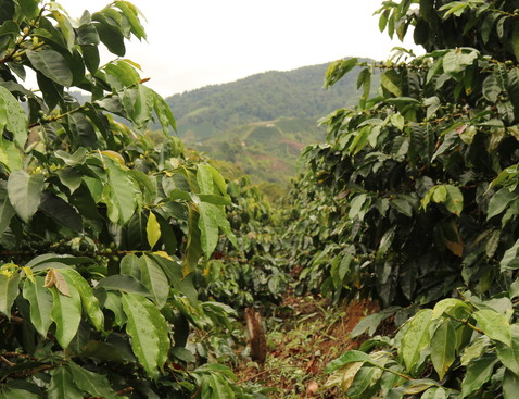 Huila 202 product list bigger cropped