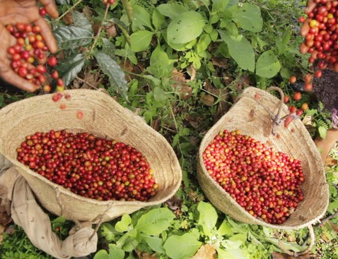 Ethiopia3 product list bigger cropped