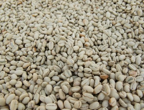 Guji2 product list bigger cropped