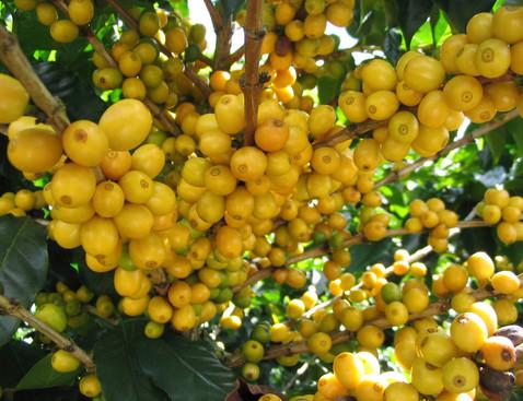 Yellowcatuai product list bigger cropped