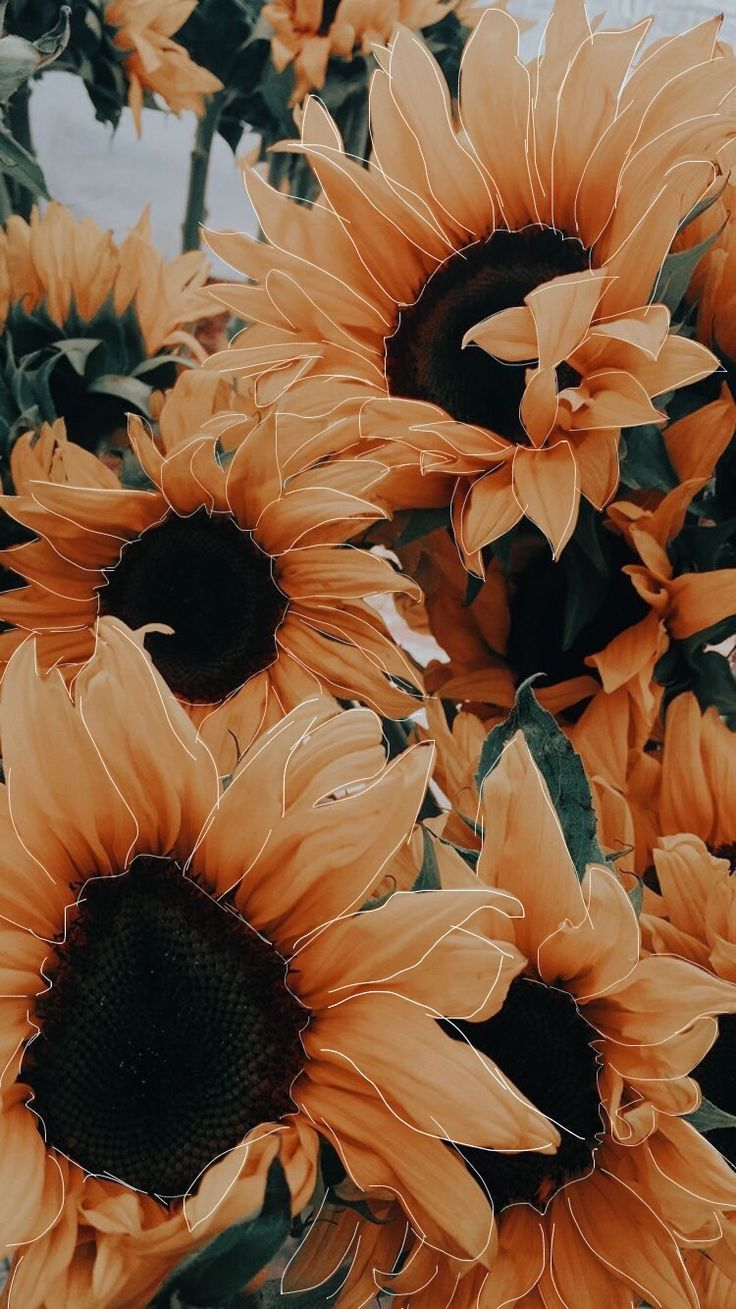 Edits Photography Yellow Sunflower Aesthetic Picsart Background Iphonewallpap With Images