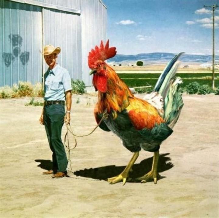 Cock Tour Dates