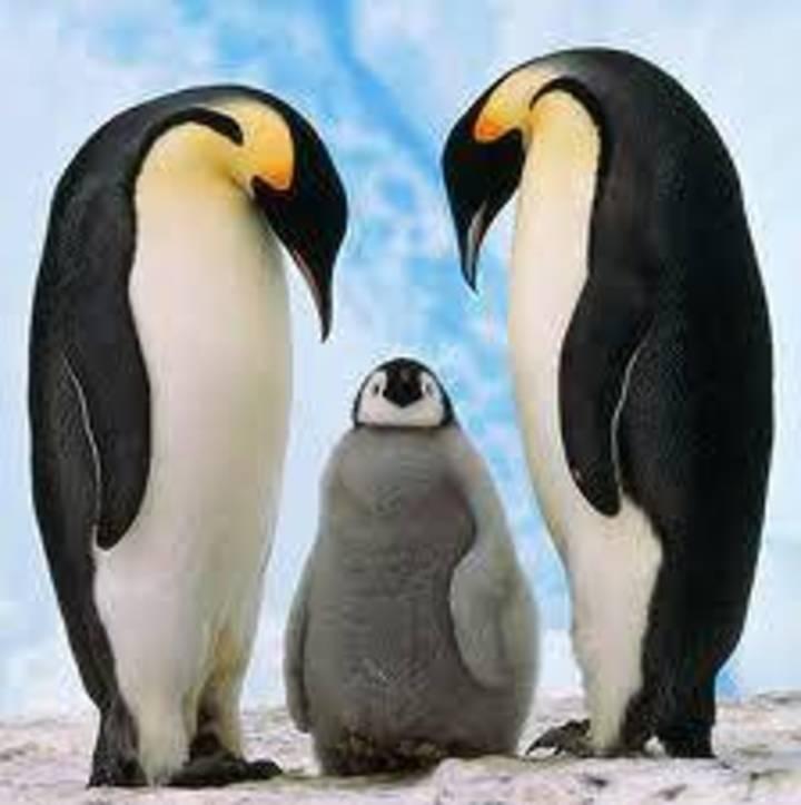 The Penguins Tour Dates