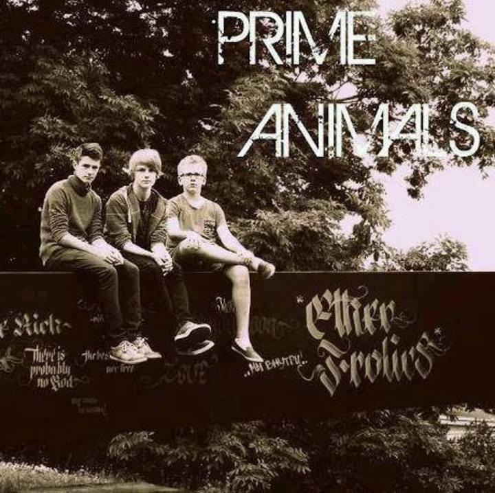 Prime Animals Tour Dates