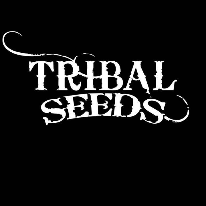 Tribal Seeds @ B Ryders - Bakersfield, CA