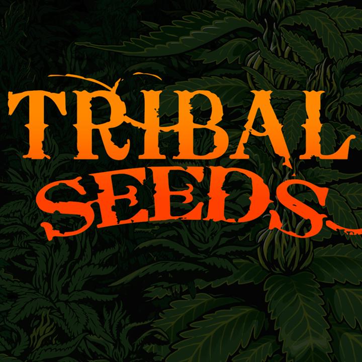 Tribal Seeds Tribal Seeds Tour Dates