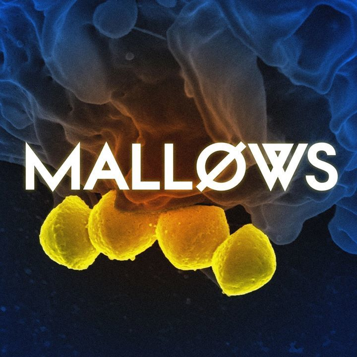 Mallows Tour Dates