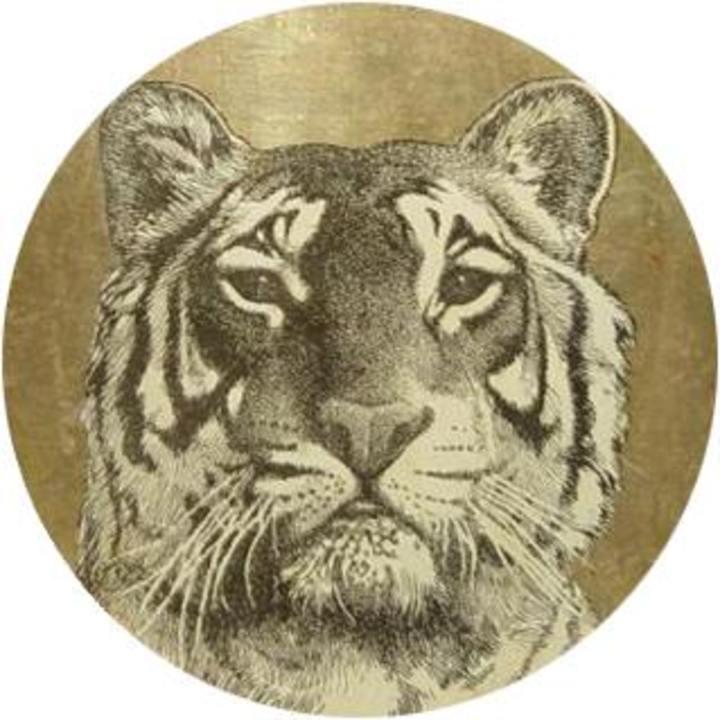 Real Live Tigers @ The Milestone Club - Charlotte, NC