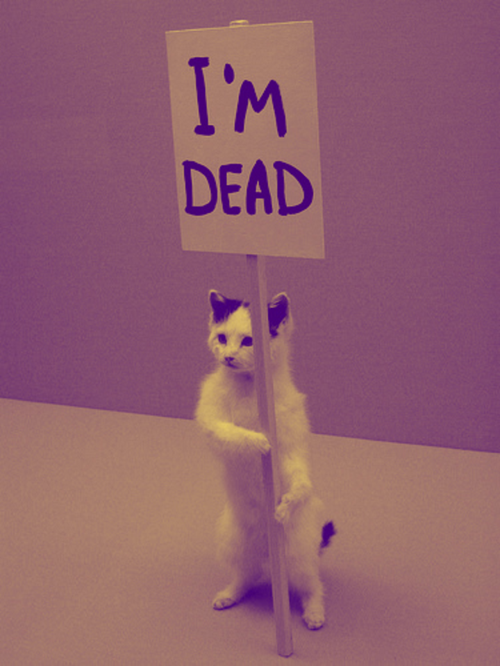 Dead Cat @ Snug Harbor - Charlotte, NC