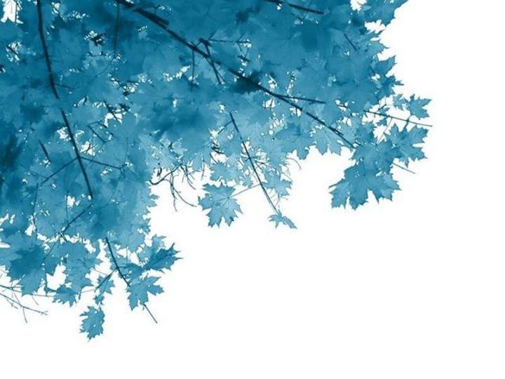 Blue Leaves Tour Dates