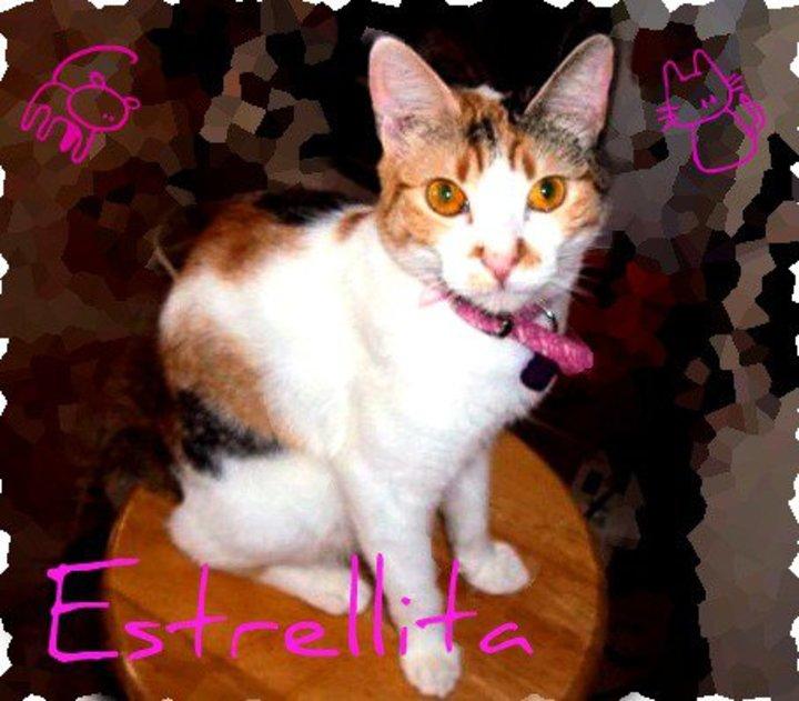 Estrellita Tour Dates