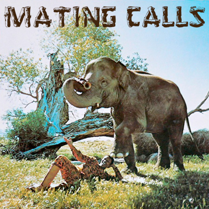 Mating Calls Tour Dates