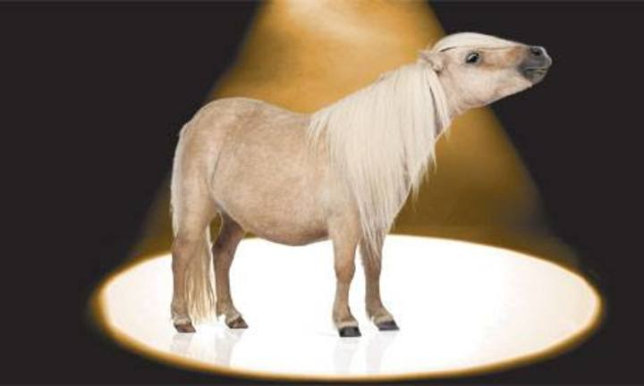 Spotlight Pony Tour Dates